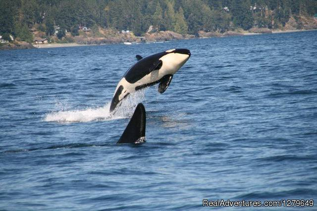 Sooke Whale Watching