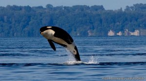 BC Whale Tours Eco Tours Victoria, British Columbia