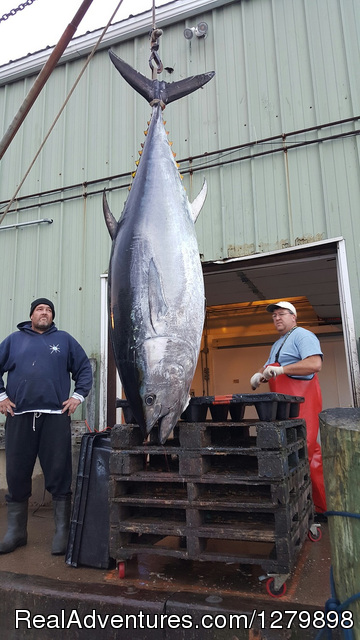 Giant Tuna - Catch Giant Bluefin Tuna, Sweet Dream Sportfishing