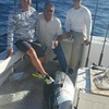 Catch Giant Bluefin Tuna, Sweet Dream Sportfishing