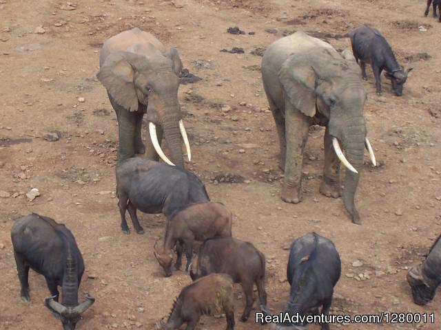 African Safaris (Kenya & Tanzania): Salt Lick