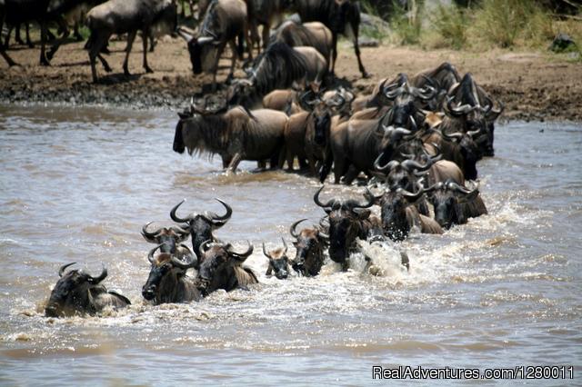 - African Safaris (Kenya & Tanzania)