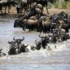 African Safaris (Kenya & Tanzania)