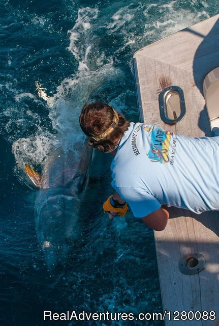 William Combs wires a nice one. - Wicked Tuna charters Gaint Bluefin Tuna