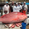 Mexico Beach Charters Mexico Beach, Florida Fishing Trips
