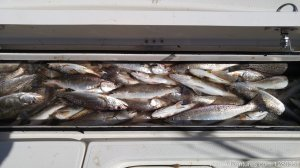 Custom Charters Theriot, Louisiana Fishing Trips