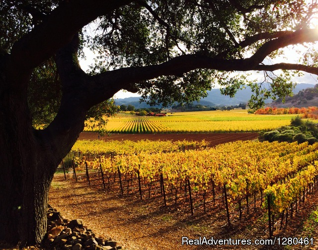 Vin de Luxe Tours:  Luxury Wine Country Tours