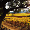 Vin de Luxe Tours:  Luxury Wine Country Tours Sonoma, California Sight-Seeing Tours