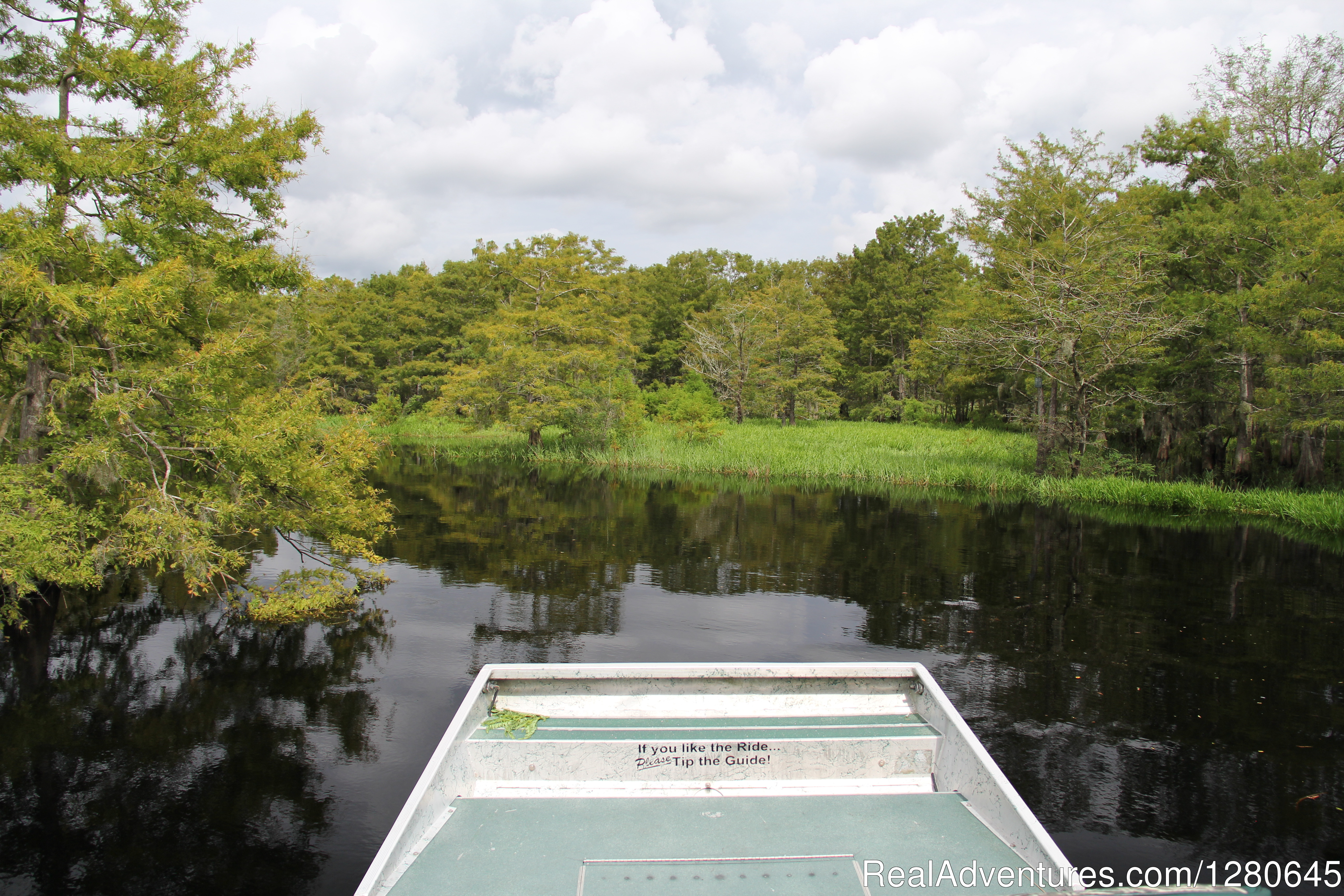 Cypress Trees Area | Image #3/15 | Midway Airboat Rides on St. Johns River