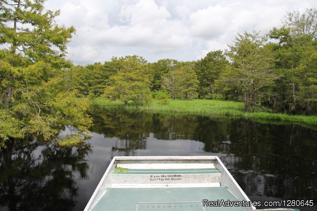 Cypress Trees Area - Midway Airboat Rides on St. Johns River
