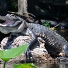 St. Johns River Eco Tours discover Real Florida