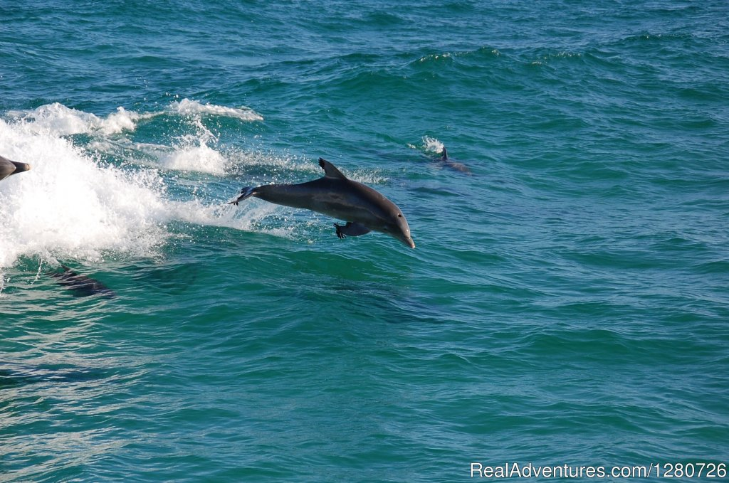 Playful Dolphin Surf in our Wake | Image #2/6 | Sea Screamer