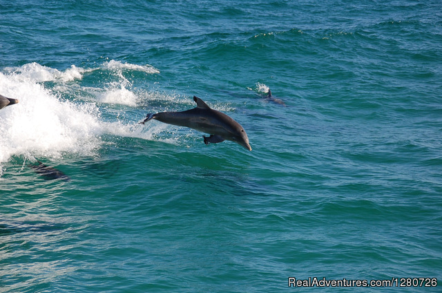 Playful Dolphin Surf in our Wake