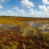 Everglades Adventure Tours Ochopee, Florida Eco Tours