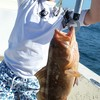 Sarasota Florida Fishing