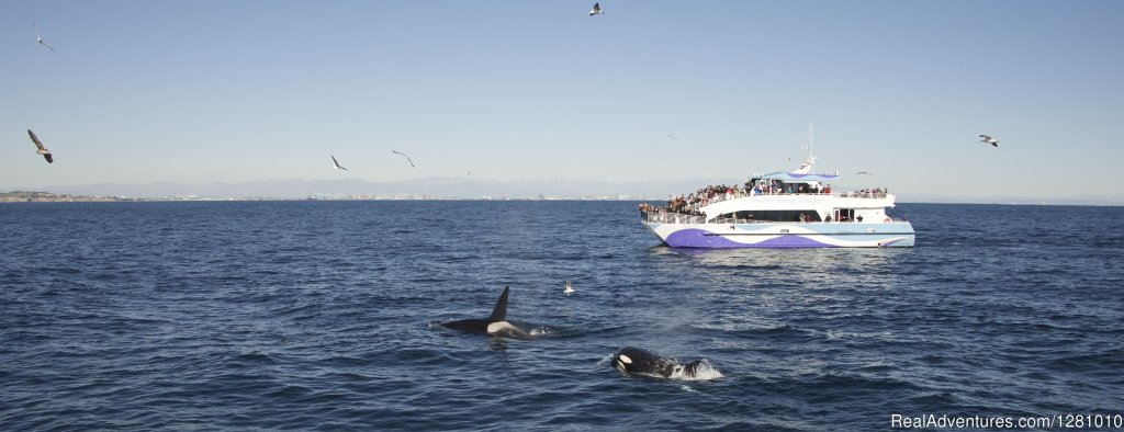 Join Harbor Breeze Cruises on an exciting journey to view some of the largest mammals on the planet. Our experienced crew and knowledgeable Aquarium of the Pacific educators will guide you on every voyage!