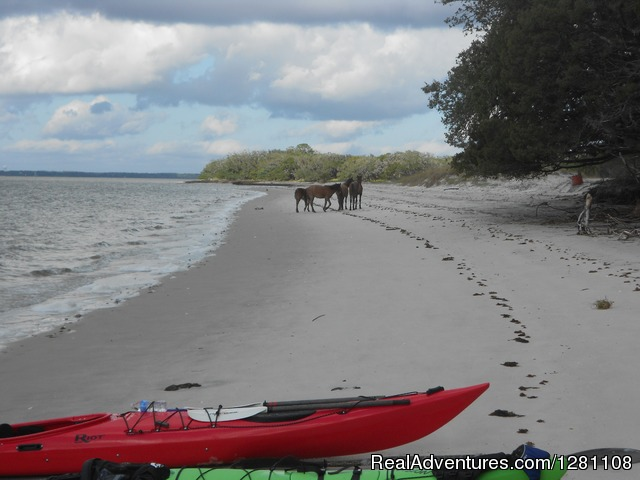 Horses on Cumberland Island - Guided Kayak Tours and Group Adventures