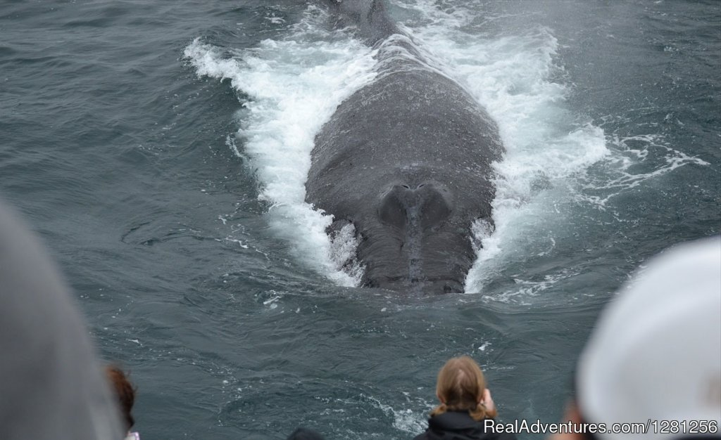 Approaching the boat | Image #6/7 | San Diego Whale Watch