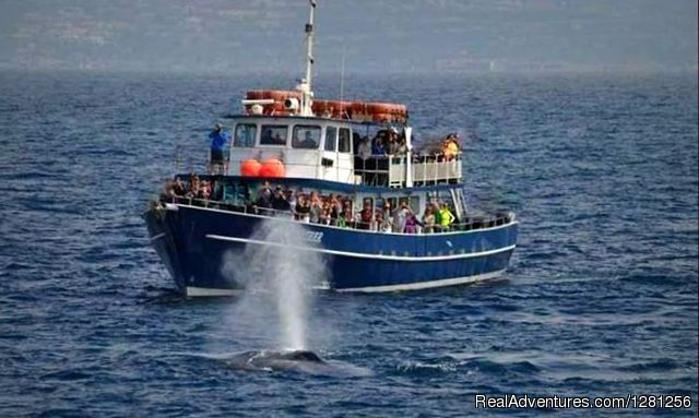 The Privateer - San Diego Whale Watch