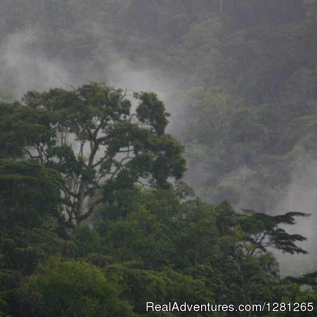 Views of the Impenetrable forest - Gorilla treks Uganda and Rwanda