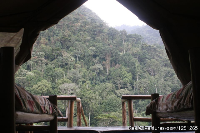 Misty forest views from the room - Gorilla treks Uganda and Rwanda
