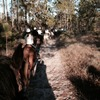 Gulfside Trail Rides, LLC Horseback Riding Santa Rosa Beach, Florida
