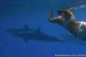 Whale Watching, Swimming with Dolphins, Snorkeling Waianae, Hawaii Wildlife & Safari Tours
