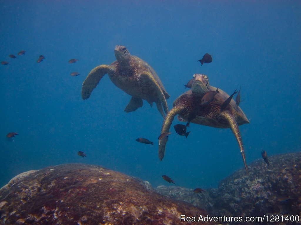 Snorkeling with green sea turtles | Image #7/7 | Whale Watching, Swimming with Dolphins, Snorkeling