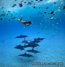Swimming with dolphins, like being in an underwater aquarium | Image #4/8 | Whale Watching, Swimming with Dolphins, Snorkeling