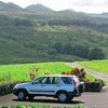 One of a kind private tours of Maui since 1983 Sight-Seeing Tours Makawao, United States