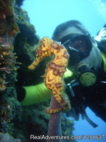 Scuba Diving Cocoa Beach Florida The Best Beaches In World