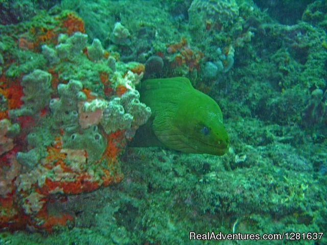 Moray eel - Scubavice Diving Center