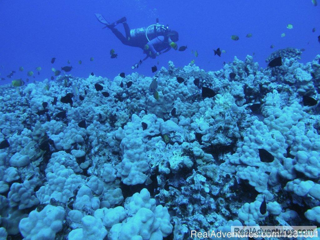 Reef dives on the North Shore of Oahu with Hawaii Eco Divers | Image #5/6 | Hawaii Eco Divers