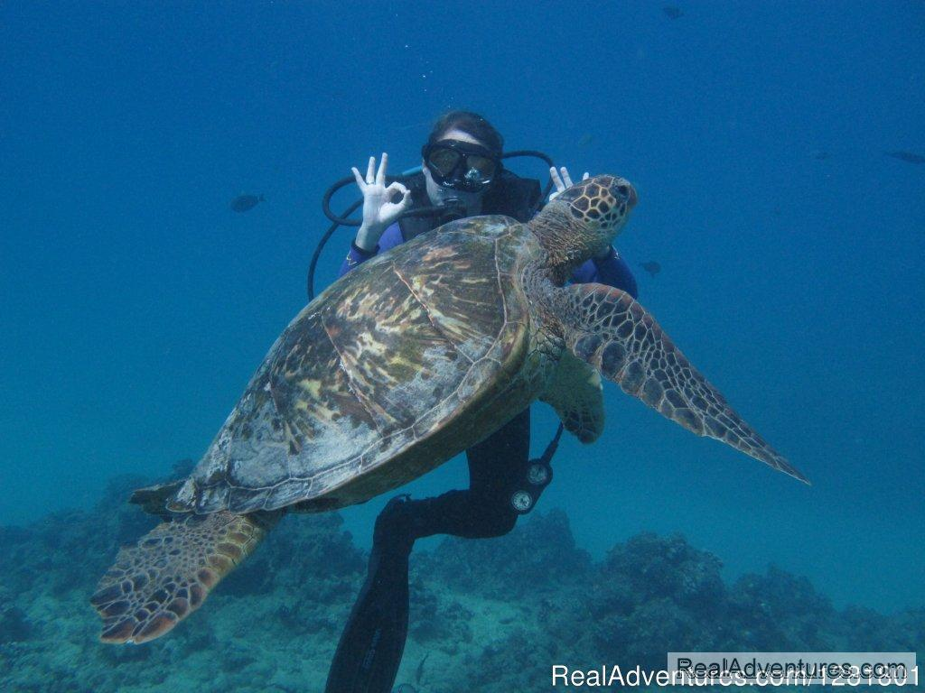 Discover Scuba Dive with Hawaii Eco Divers | Image #6/6 | Hawaii Eco Divers