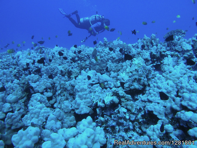 Reef dives on the North Shore of Oahu with Hawaii Eco Divers