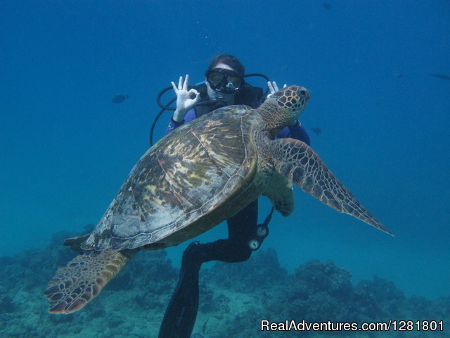 Discover Scuba Dive with Hawaii Eco Divers