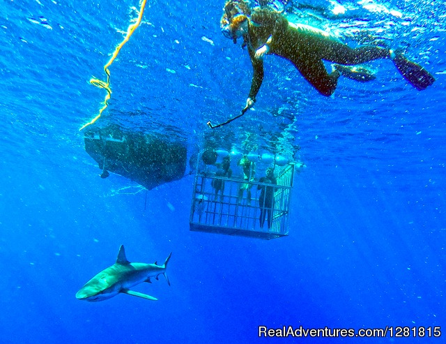 Shark Cage Tour & Freediver Outside Cage - H20 Adventures Hawaii Shark Cage Tours & Diving