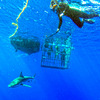 H20 Adventures Hawaii Shark Cage Tours & Diving