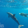 Dolphin Journeys