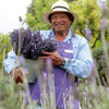Ali'i Kula Lavender Sight-Seeing Tours Kula, Hawaii