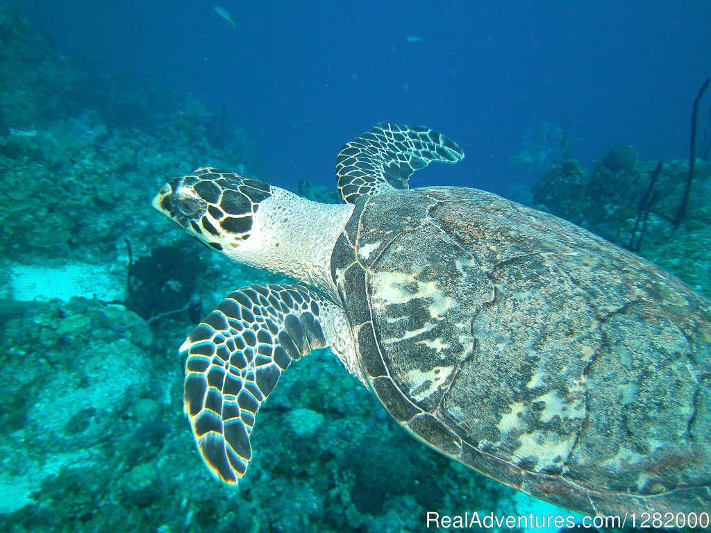 Great To See , When Teaching A Sea Turtle Awarness Class. | Image #3/5 | Scuba Emporium