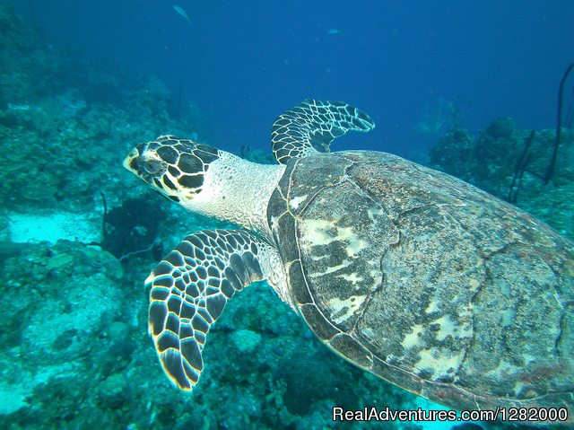 Great To See , When Teaching A Sea Turtle Awarness Class. - Scuba Emporium