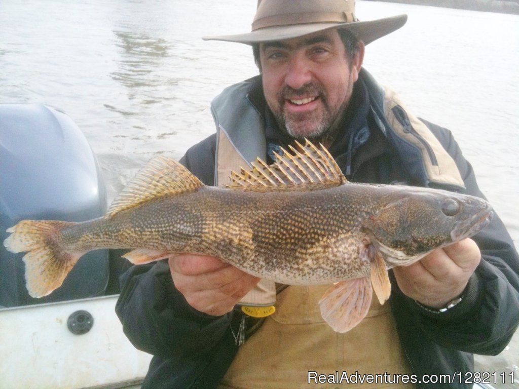 Lunker Illinois River Sauger | Image #2/8 | Small groups, Big catches with Wild Dog Good Guyde
