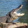 Eco-swamp tours at Cajun Country Swamp Tours