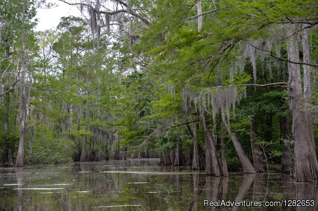 The Last Wilderness Swamp Tour Bayou Sorrel, Louisiana Cruises