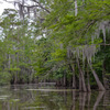 The Last Wilderness Swamp Tour Scenic Cruises & Boat Tours Louisiana