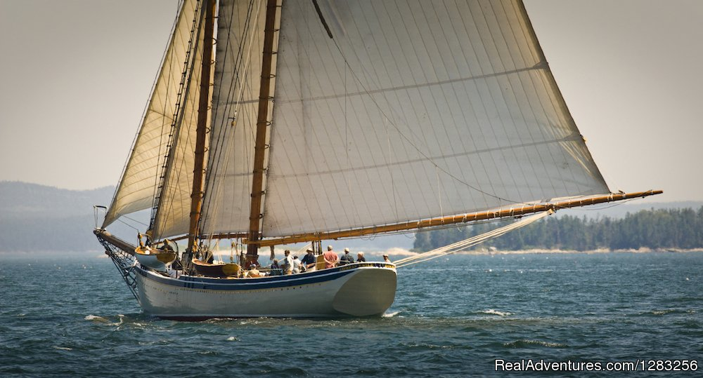 The Maine Windjammer Association includes 8 traditional sailing vessels that offer 3- to 10-day cruises along the coast from May through October. Great sailing, great shipmates, great food, including a lobster feast on every cruise.
