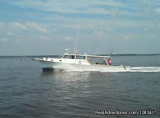 Stormy Petrel Charters Deale, Maryland Fishing Trips