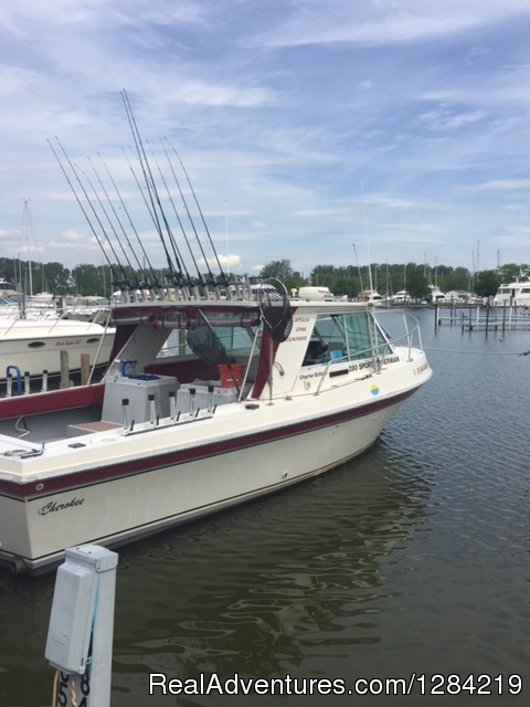The Stray Cat - Stray Cat Charter Fishing