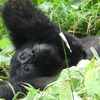 Exhilarating Wildlife Safaris Kampala, Uganda Wildlife & Safari Tours